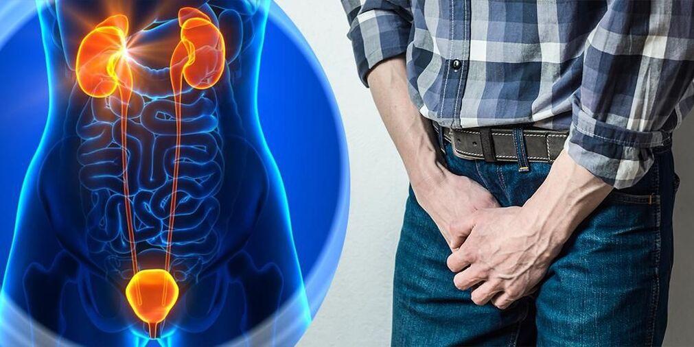 Akut prostatitis tsifran